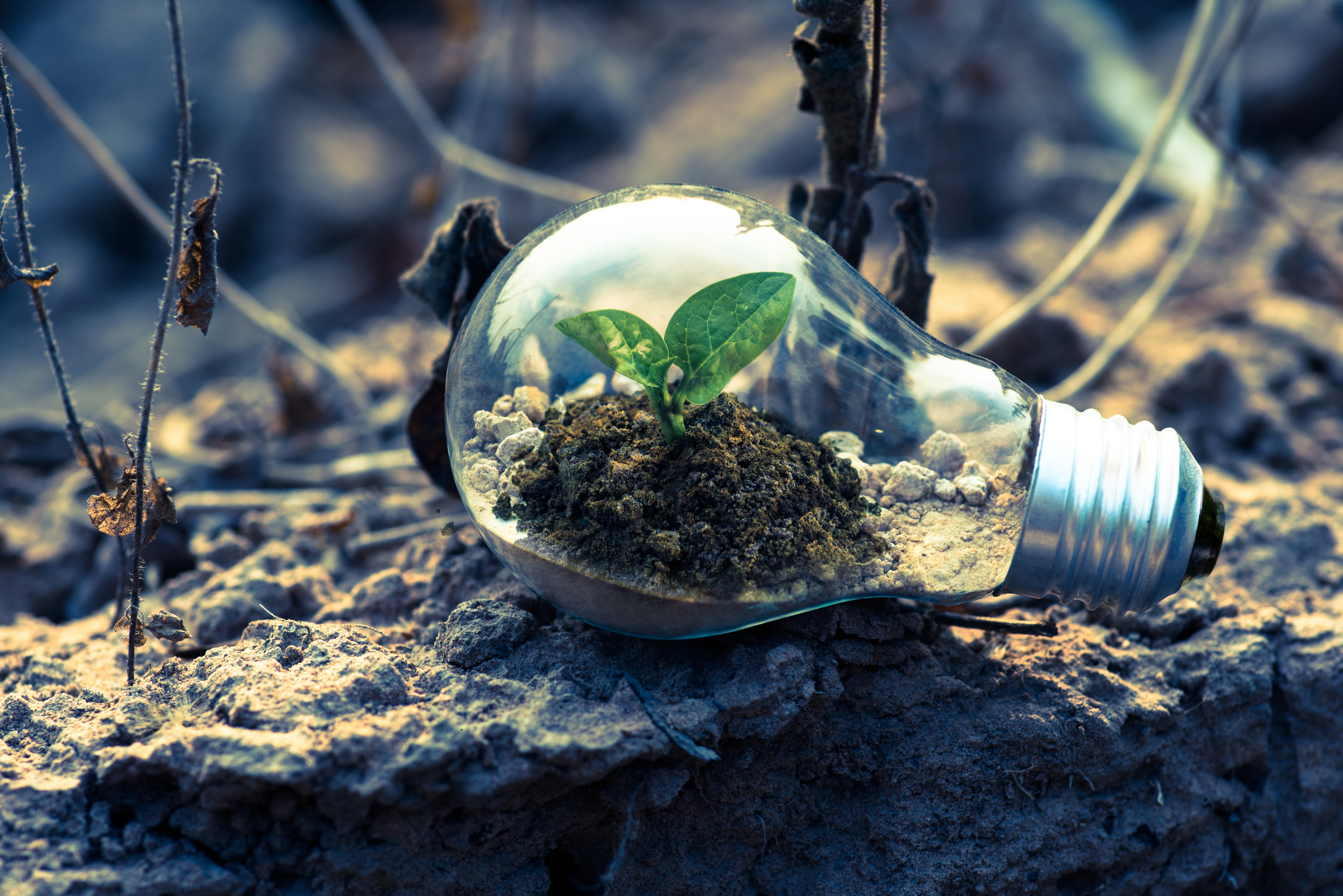 Hardwiring climate action into the next research and innovation programme