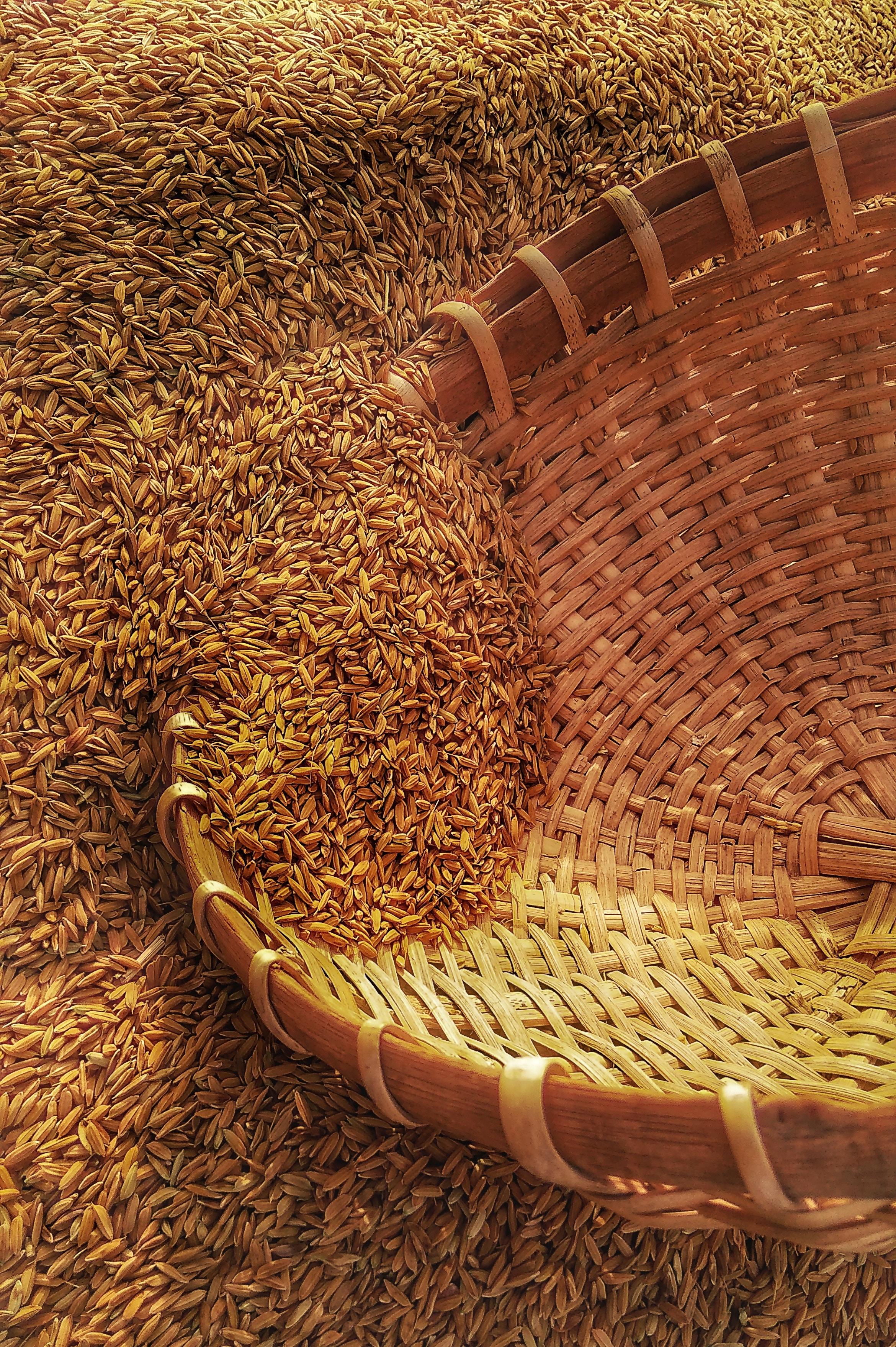 «Graines de maraîchers»