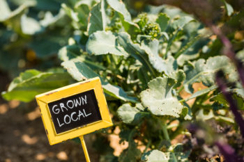 Systèmes alimentaires locaux : la «Ceinture Aliment-Terre» de Liège